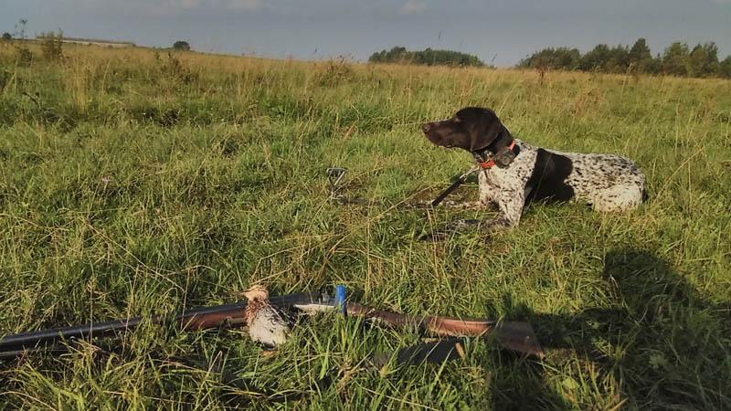 Охота на куропаток, скидки для групп до 50%